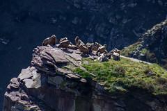 ItsusikoHarria-61 (enekobidegain) Tags: mountains montagne monte euskalherria basquecountry pyrnes pirineos mendia paysbasque nafarroa pirineoak bidarrai itsasu itsusikoharria