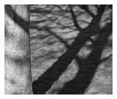 (Gene Daly) Tags: newyorkcity blackwhite genedaly petri50mm p4200042 olympusem5 petriorikkorkuribayashicc50mmf2