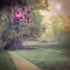 Don't brood. Get on with living and loving. You don't have forever.... Leo Buscaglia (Nick Kenrick.) Tags: pink blossom path sakura magicunicornverybest blankofilm sergiolens