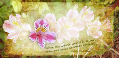 When the whole world is silent, even one voice becomes powerful. (Malala Yousafzai) (boeckli) Tags: pink flowers plants power outdoor blossoms pflanzen rosa voice blumen textures powerful legacy alstroemeria blten texturen peruvianlily insipration poetography untouchabledream extraordinarilyimpressive malalayousafzai