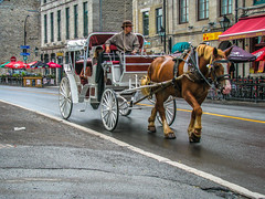 Vieux-Port de Montral (A Great Capture) Tags: old summer horses horse canada de photographer carriage ride montral quebec montreal canadian pot archives drawn qc vieuxport vieux agc 2015 calche jamesmitchell adjm wwwagreatcapturecom agreatcapture mobilejay