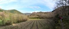 Le cirque de Labeil (brigeham34) Tags: panorama mars france montagne rando eu paysage campagne vignes printemps falaises languedocroussillon hrault valle randonneurs beautemps lauroux forts cirquedelabeil fz45 lescornichesdelauroux