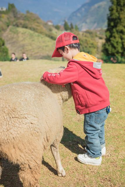 戶外親子攝影,全家福攝影推薦,兒童親子寫真,兒童攝影,南投清境攝影,紅帽子工作室,婚攝紅帽子,清境小瑞士攝影,清境農場親子,清境農場攝影,親子寫真,親子攝影,familyportraits,Redcap-Studio-85