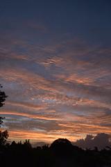 Blue Waves (Images by Jeff - from the sea) Tags: pink blue trees sky clouds twilight nikon dusk bluesky nikkor pinksunset pinkclouds bundaberg d5500 nikkor18140mm
