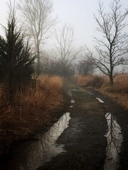 The Way (Wayne Greer) Tags: fog kansas atmospheric mobilephotography iphoneography waynegreer iphone6s