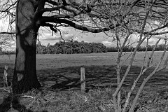 Wild Horses in black-and-white - Herd - 2016-015_Web (berni.radke) Tags: horse pony herd nordrheinwestfalen colt wildhorses foal fohlen croy herde dlmen feralhorses wildpferdebahn merfelderbruch merfeld przewalskipferd wildpferde dlmenerwildpferd equusferus dlmenerpferd dlmenpony herzogvoncroy wildhorsetrack