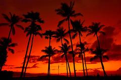Maui sunset (gianluca.bussolari) Tags: sunset beach hawaii nikon tramonto maui romantic atmosfera palme romantico luce kaanapali alohastate kaanapalibeach d7100 tramontoromantico atmosferaromantica