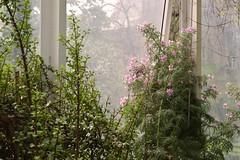 (Blufuliggine) Tags: flowers parco primavera torino spring botanico fiori serra viola botanics luce botanica valentino orto rampicanti parcodelvalentino