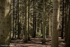IMGP1108 (acornuser) Tags: park trees blackandwhite bw reflection water woodland garden landscape waterfall spring surrey cascade virginiawater blosom sigma1770 pentaxk3