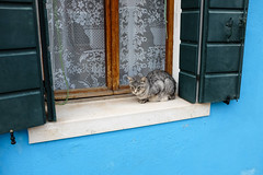 Burano : Le chat de la maison bleue (http://visiteursdumonde.com) Tags: venice cat chat venise venezia burano