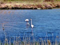 Capoterra - Flamingos (Martin M. Miles) Tags: italy sardinia flamingo sardinien ros sardaigne capoterra provinciadicagliari provinceofcagliari