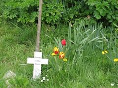0307 Yr Wyddfa - Mt Snowdon (Andy in relax mode) Tags: flowers mmm ccc fff ttt memorialcross memorialtree aberlleiniog picnicplatz 20160426