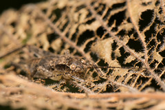 Can you see me ? (stavale8099) Tags: macro insect nikon camoflauge mimicry