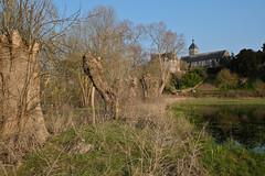 DSCF0575 (kuzdra) Tags: trees france tree spring village arbres arbre anjou   dene