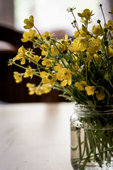 120/366 - On my table (burberi (detta Buf)) Tags: flowers nature spring nikon daily fiori nikkor springtime 2485mm beuf d7000 burberi captureyour365