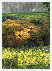 Paris, Parc Andre Citroen: jardin noir japanese maple   2013-09 (Brigitte Rieser) Tags: park paris france garden maple frankreich jardin acer parc garten ahorn andrecitroen jardino jardinnoir
