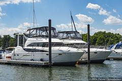 Luxury Yachts in Mamaroneck Harbor (Concert_Photos_Magazine) Tags: usa newyork boats harbor waterfront unitedstatesofamerica boating yachts harborisland luxury westchester longislandsound yachting westchestercounty mamaroneck mamaroneckharbor luxuryyachts 13035857283