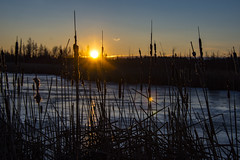 Winter sunrise at Mer Bleue Conservation area. (runningman1958) Tags: nature sunrise dawn nikon 365 winterscene 365dayproject d7200 merbleuconservatoryarea nikond7200
