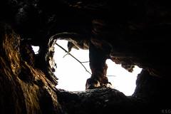 Castillos, rboles, cuevas y montaas (Ral Simn) Tags: tree rbol hollow hueco