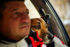 Drive carefully (petrapetruta) Tags: dog cute eyes funny carlzeissjena