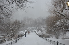 Central Park, 01.23.16 (gigi_nyc) Tags: nyc newyorkcity winter snow centralpark snowstorm blizzard blizzard2016 jonasblizzard
