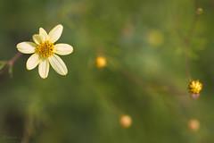 Dreamy Beauty (Elena L-v) Tags: flower macro platinumheartaward