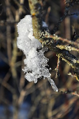 DSC_0033 (nilarii) Tags: schnee winter snow ice nikon outdoor eis d5000