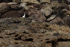 DSCF5641 (FredrikBeskow) Tags: strand islands sand fuerteventura canary morro kanariearna jandia jable