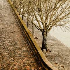 Seine river winterscape (bat7000) Tags: street city winter paris france tree colors seine river square mood cityscape vivid atmosphere arnaudvautrin