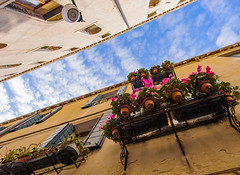 Flowers in January (JN) Tags: city flowers venice sky italy vertical nikon italia perspective 1735mmf28d venezia 1735mm d700