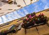 Flowers in January (JØN) Tags: city flowers venice sky italy vertical nikon italia perspective 1735mmf28d venezia 1735mm d700