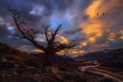 Condors and Light (Mark Metternich) Tags: trees sunset patagonia mountain mountains tree argentina tour mark surreal el mount workshop valley condor tours condors workshops chalten surrealscape markmetternich markmetternichcom
