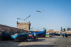 Essaouira - Fish market (Thomas G. from U.) Tags: africa food fish essen market morocco maroc maghreb fishmarket essaouira marokko mogador bluedoors almaghrib kingdomofmorocco northwestafrica  mogadore   thewesternkingdom asawra taurt almamlakahalmaghribiyah regionofwesternnorthafrica marrakeshsafi  313047n94611w