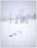 Winter trees (Georg Engh) Tags: landscapesshotinportraitformat