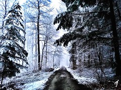 """Only One Way Through The Cold Forest"" (Anschuetz Photography) Tags: winter cold nature forest germany way cool path coldweather mothernature pathway forestpath coldday coldwinter aichwald coldtemperature forestphoto"