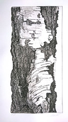 Bark 2 (art.vestifex) Tags: tree etching bark baum rinde radierung realismus ralfschneider aquatinta vestifex