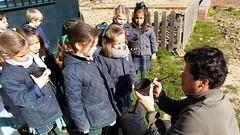 huerto-niños-colegio-madrid (14)