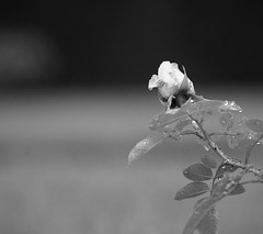 (Natalia Romashina) Tags: blackandwhite white mist nature rose fog mystery square landscape photography blackwhite noir drew squareformat bnw iphoneography instagramapp