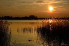 Wandlitzer See