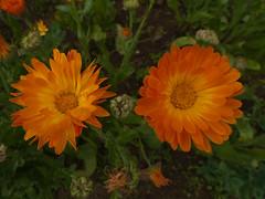 Tea garden (Jackie & Dennis) Tags: flowers garden munnar rwh royalretreat ramblersworldwideholidays