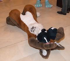 DSC_3484 (Acrufox) Tags: midwest furfest 2014 furry convention december hyatt regency ohare rosemont chicago illinois acrufox fursuit fursuiting mff2014