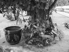 Ubon Ratchathani - Thailand (jcbkk1956) Tags: blackandwhite tree thailand temple mono shrine samsung thai ubonratchathani templegrounds