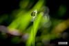 H41C2186-01 (joly_jeff) Tags: portrait paris canon noiretblanc hdr couleur pontneuf photographe poselongue eosmarkiii photosdeparis droitsréservés caisseaméricaine jeanfrançoisjoly jeffjoly equipeinteractivecom
