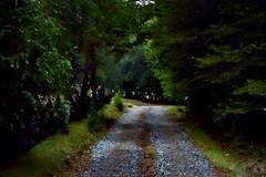 Caminito. ([ROBZ]) Tags: light color verde art classic nature rio digital river noche photo nikon dof colores cielo sur invierno nikkor cinematic dx valdivia d3200 vsco afs35mm18g iphone5s vasocam