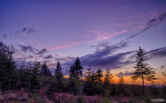 Sunset in the Forest ... (AstroGuiGeek) Tags: sunset sky sun moon clouds lune skyscape soleil landscapes ciel normandie nuages crpuscule normandy paysages hdr coucherdesoleil crescentmoon t3i 600d canonphotography croissantdelune eos600d canoneos600d astroguigeek