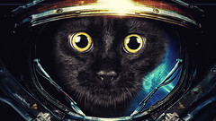 Cat astronaut (Joakim.Holmberg) Tags: cats cute cat photoshop space astronaut