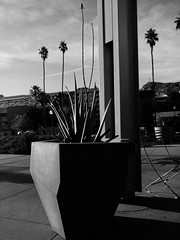 Aloe and Palms. (isaacullah) Tags: light arizona sky urban plants lines vertical contrast palms mono raw shadows geometry planter android nexus tempe linear 5x proshot snapseed