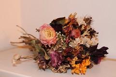 Times goes by... (slaiv91) Tags: flowers nature still time natur dry blumen natura fiori tempo zeit morta stille secchi