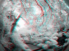 3D anaglyph (zkj102) Tags: park city red tree garden ir photography stereoscopic stereogram stereophoto stereophotography 3d cityscape shanghai photos anaglyph images stereo infrared stereoview stereograph stereography stree bule stereos stereoscope stereoscopy anaglyphic stereographic irphotography redcyan shanghaichina shanghaiinfrared