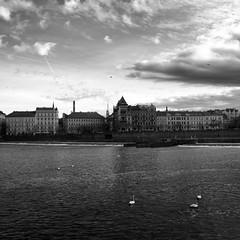 Prague (Nicola Corneo) Tags: city sky water clouds buildings river daylight blackwhite prague swans czechrepublic vltava